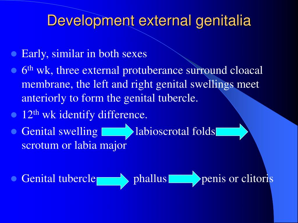 Development external genitalia