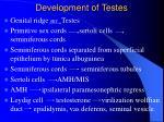 development of testes13