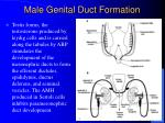 male genital duct formation