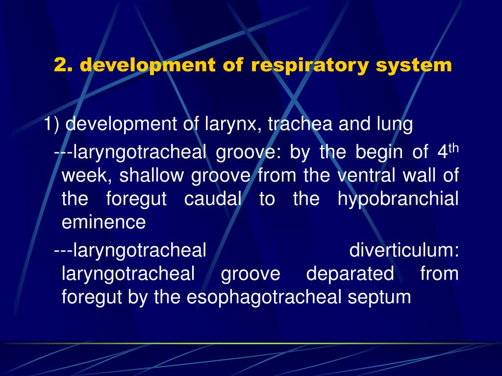 2. development of respiratory system