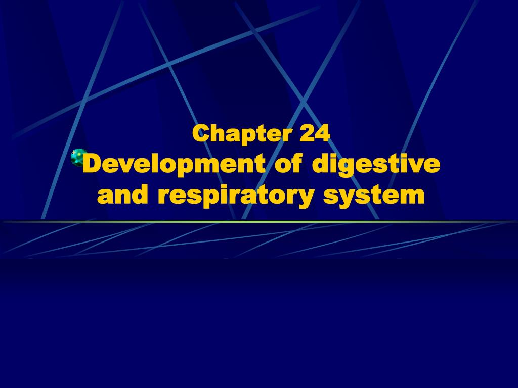 chapter 24 development of digestive and respiratory system l.
