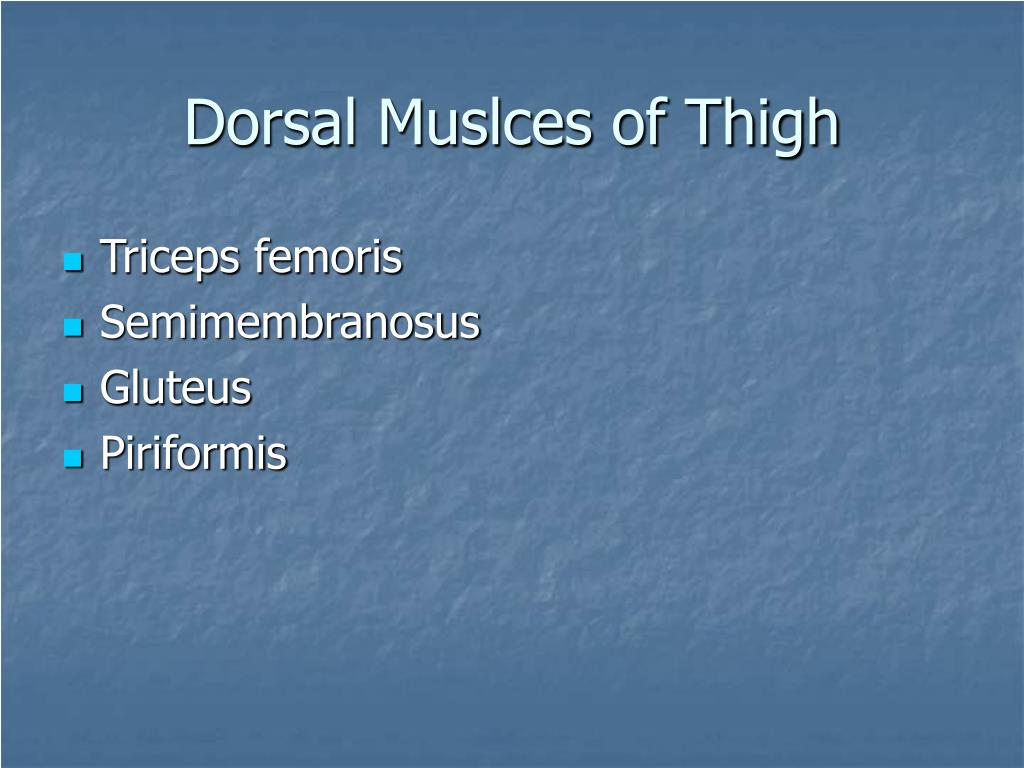 Dorsal Muslces of Thigh