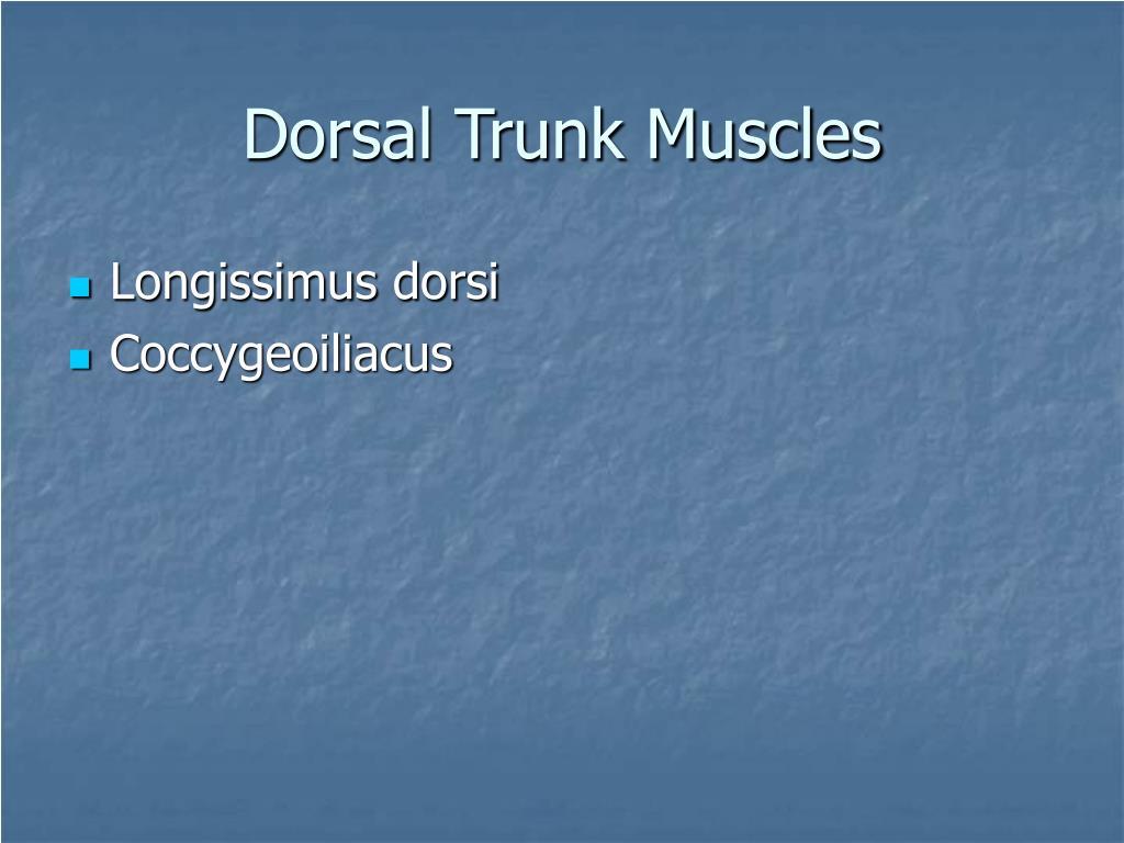 Dorsal Trunk Muscles