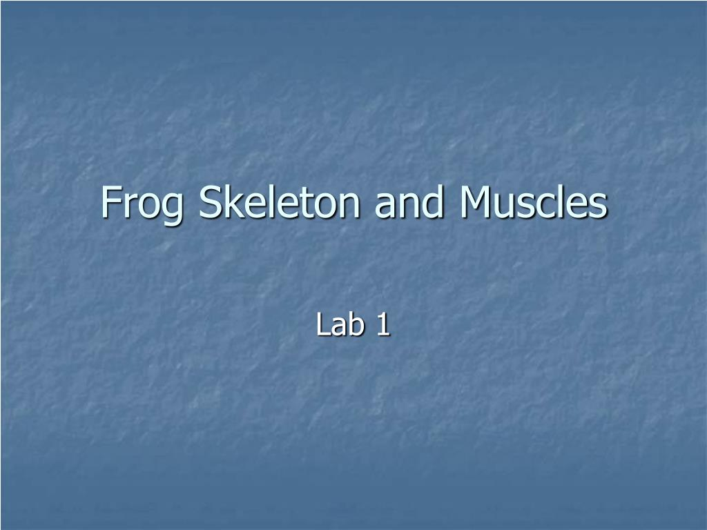 Frog Skeleton and Muscles