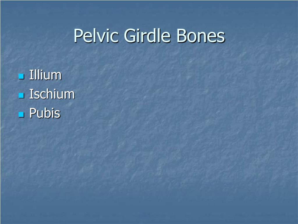 Pelvic Girdle Bones