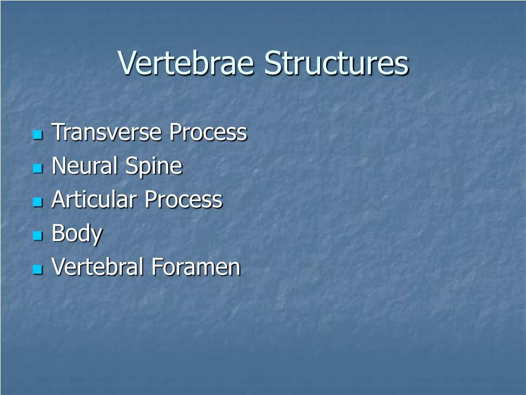 Vertebrae Structures