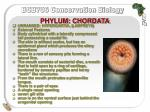 phylum chordata11