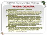 phylum chordata13