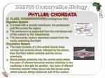 phylum chordata22