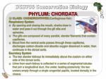 phylum chordata24