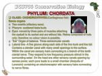 phylum chordata25