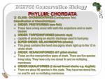 phylum chordata29