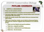 phylum chordata3