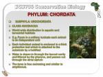 phylum chordata4