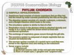 phylum chordata7