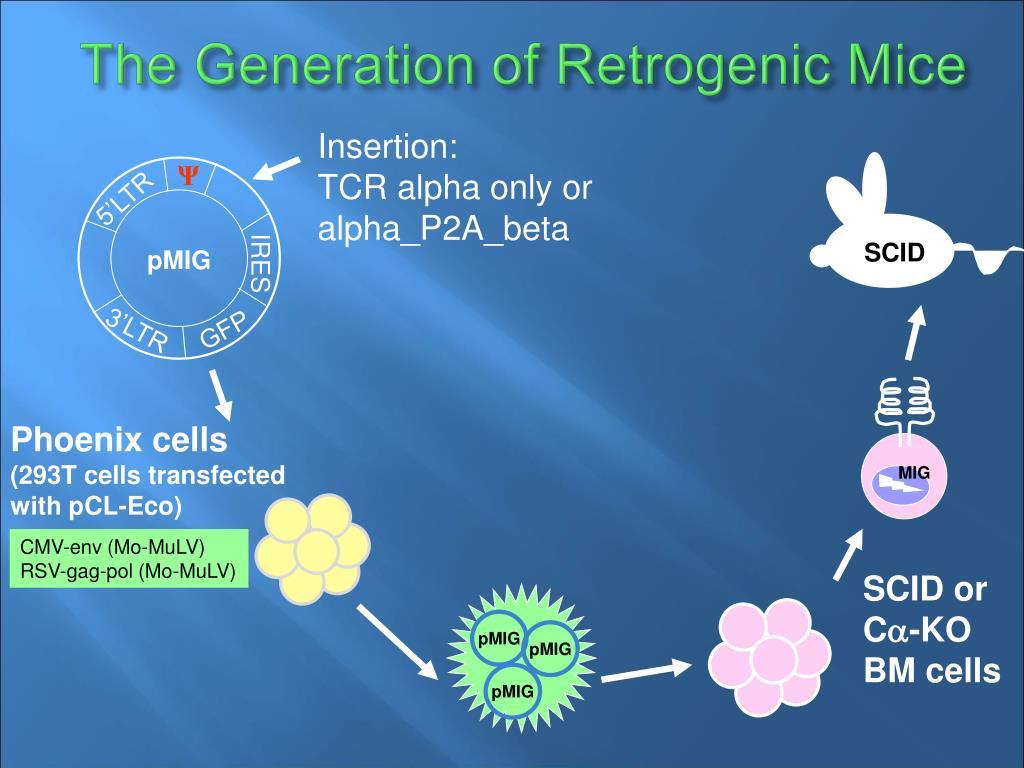 the generation of retrogenic mice l.