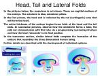head tail and lateral folds