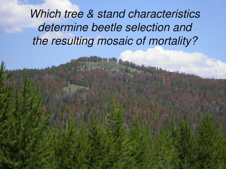 Which tree & stand characteristics determine beetle selection and