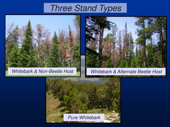 Three Stand Types