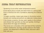 coral trout reproduction