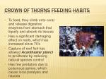 crown of thorns feeding habits