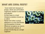 what are coral reefs
