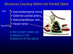 structures coursing within the parotid gland