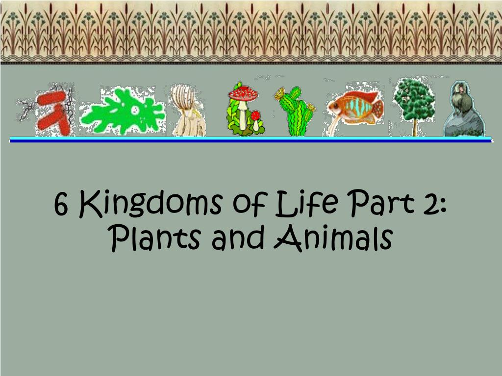 PPT - 6 Kingdoms of Life Part 2: Plants and Animals ...