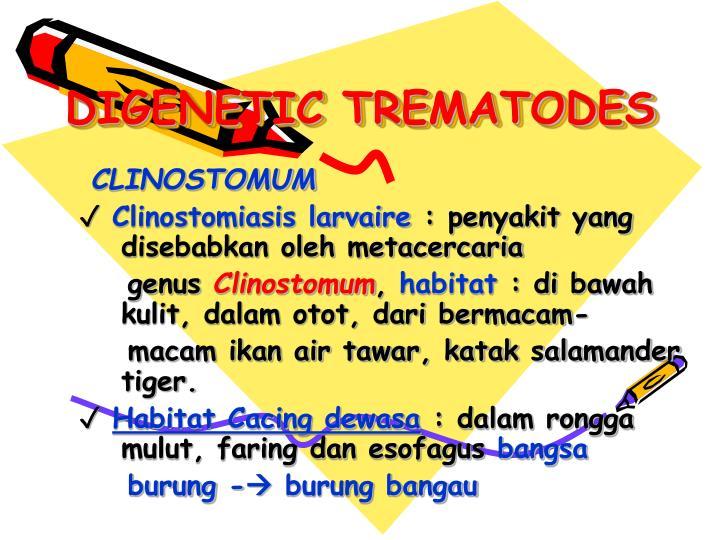 Digenetic trematodes3