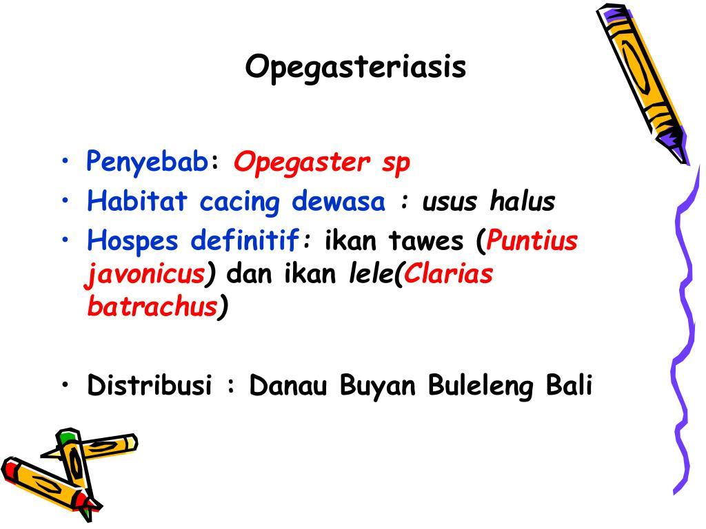 Opegasteriasis