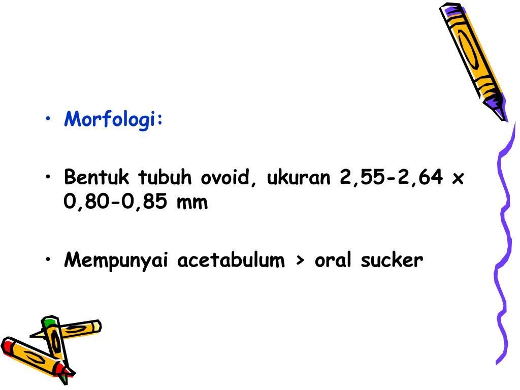 Morfologi: