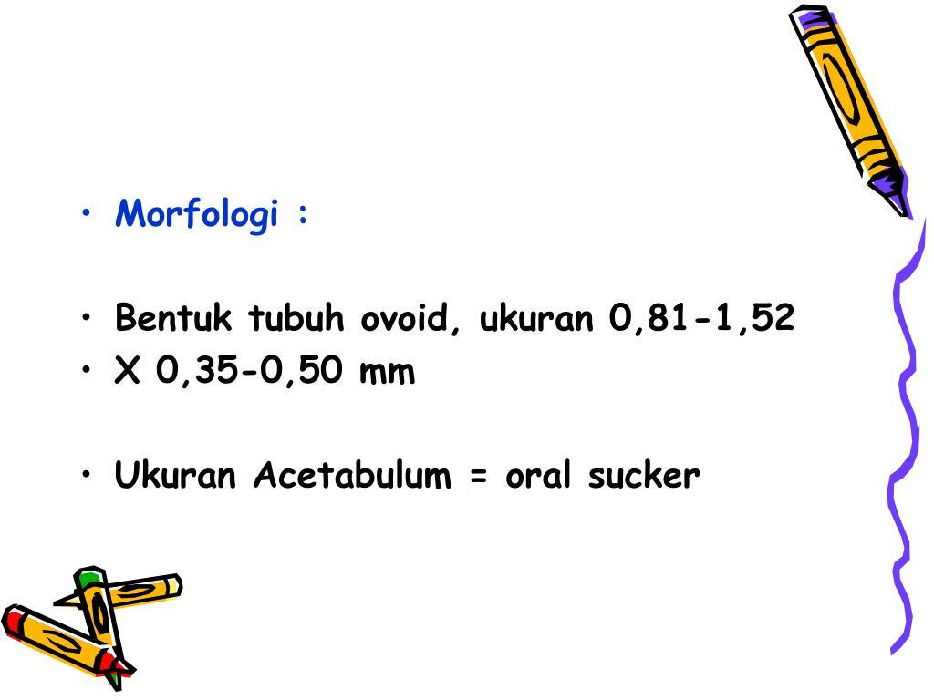 Morfologi :