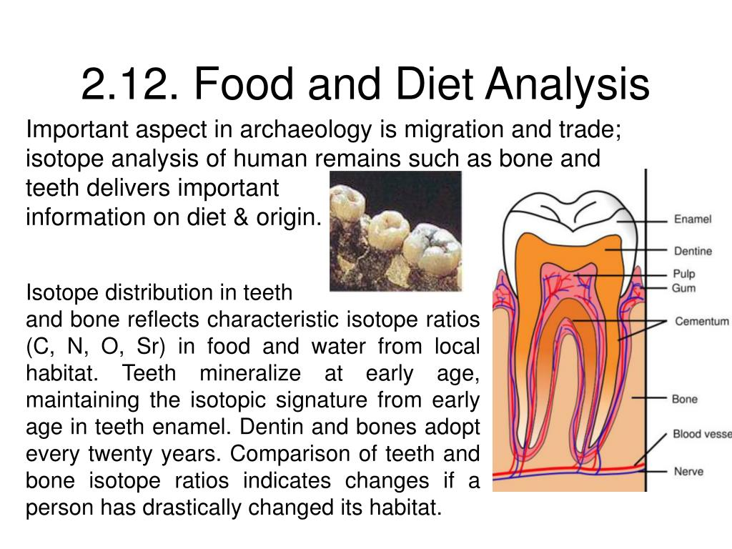 2 12 food and diet analysis l.