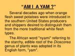 am i a yam