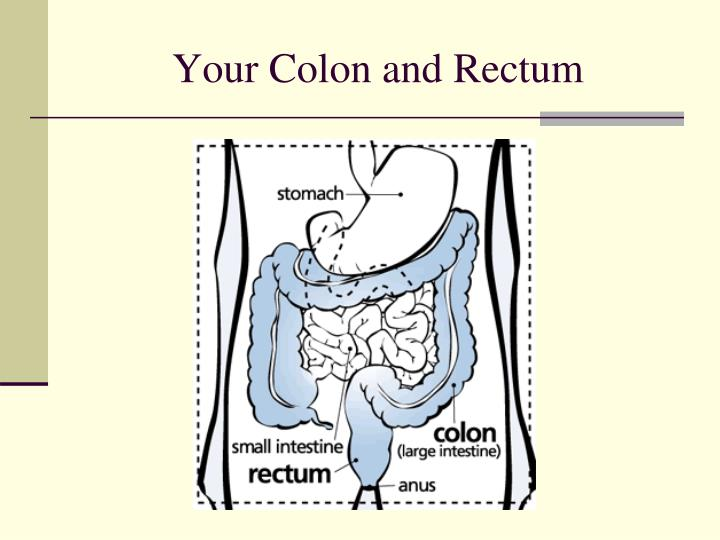 Your colon and rectum