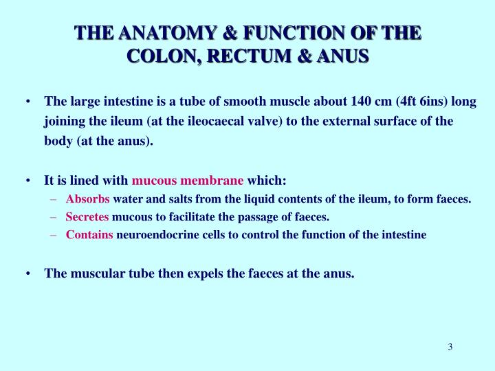 The anatomy function of the colon rectum anus