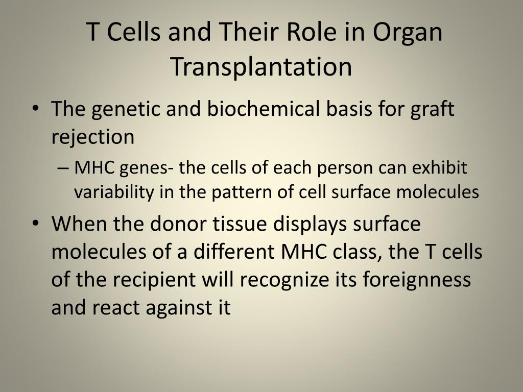 T Cells and Their Role in Organ Transplantation