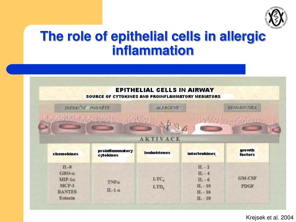 The role of epithelial cells in allergic inflammation