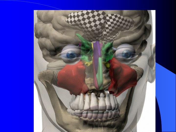 3d frontal view