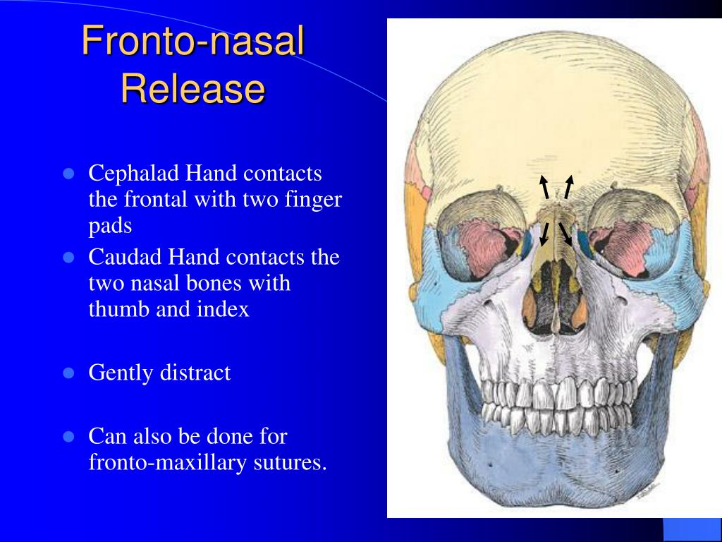 Cephalad Hand contacts the frontal with two finger pads