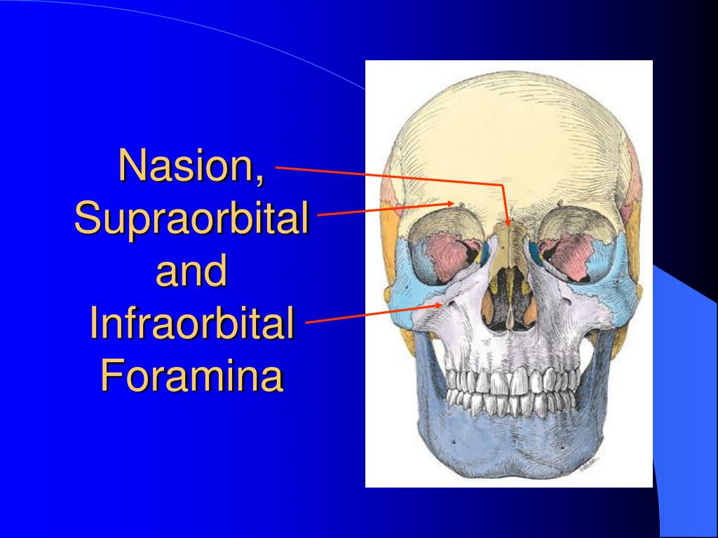 Nasion, Supraorbital and Infraorbital Foramina