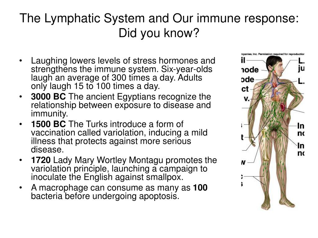 the lymphatic system and our immune response did you know l.