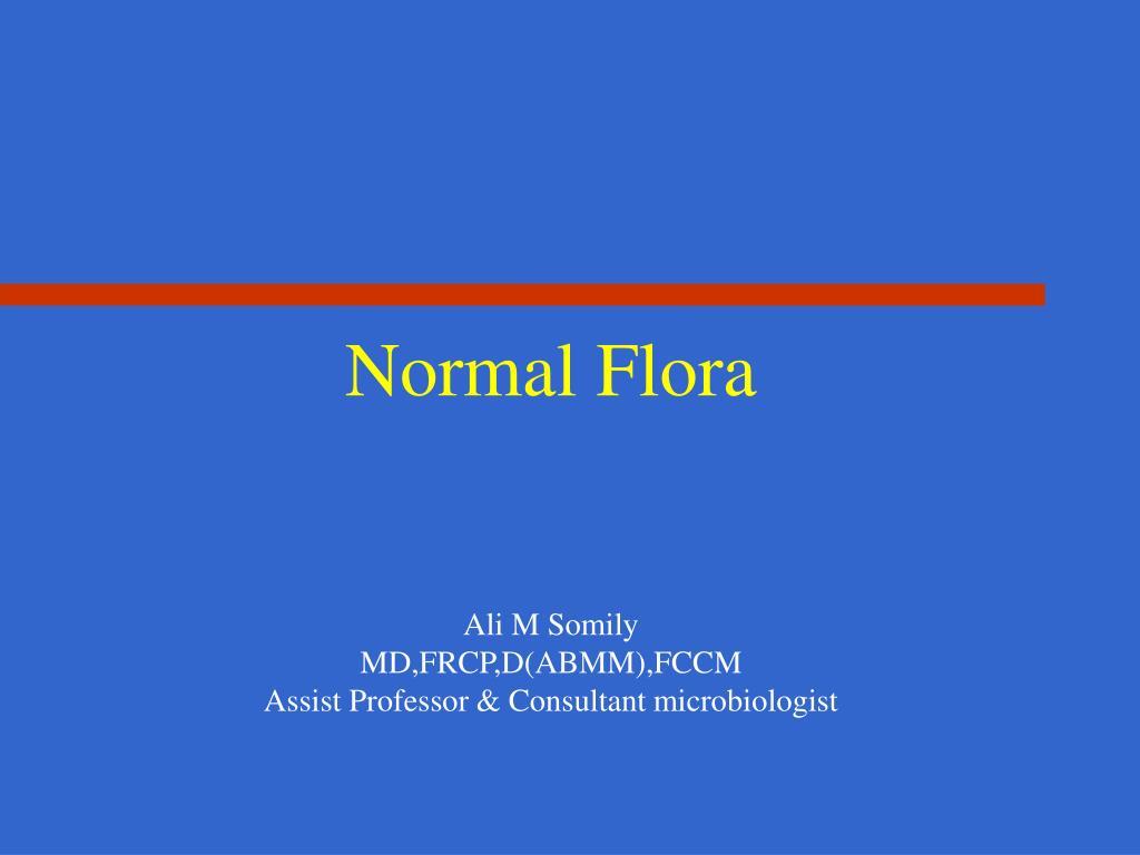normal flora l.
