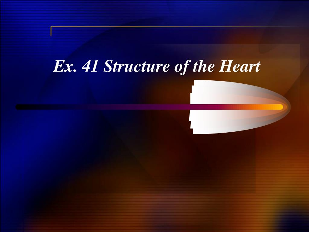 Ex. 41 Structure of the Heart