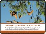 section 2 forests rely on foxes that fly