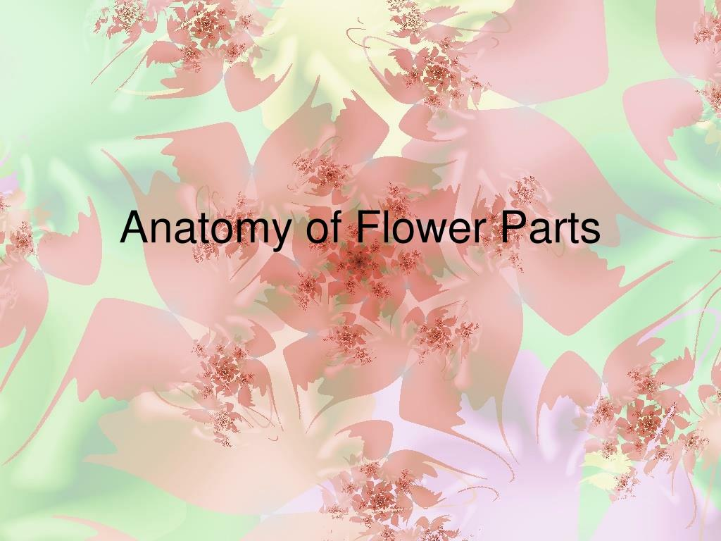 PPT - Anatomy of Flower Parts PowerPoint Presentation - ID:662438