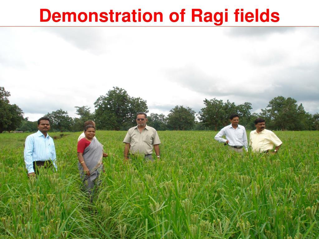 Demonstration of Ragi fields