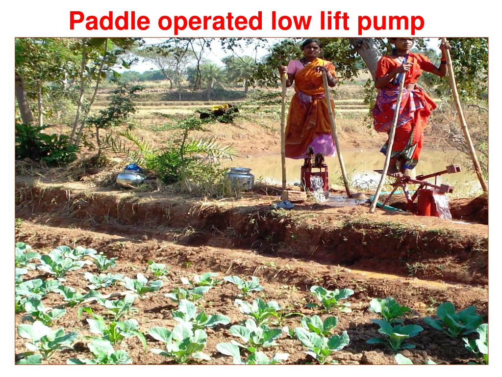 Paddle operated low lift pump