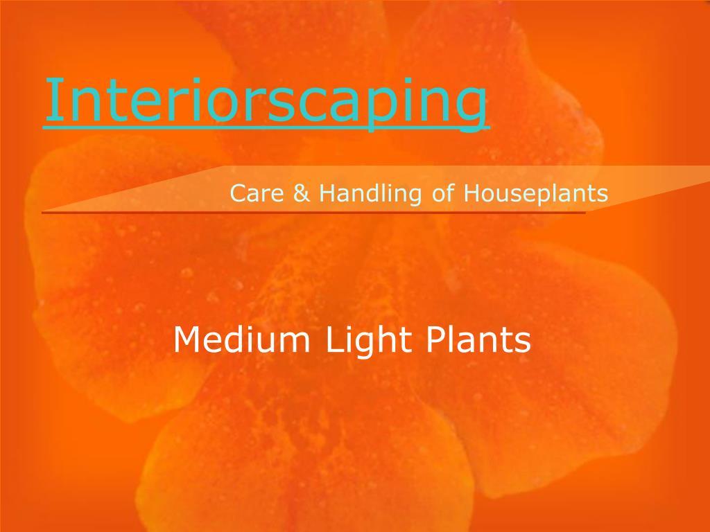 medium light plants l.