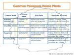 common poisonous house plants8